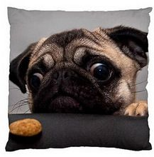 Customized Funny Dog Puppy Pug with Cookie Chihuahua Love Music Zippered Pillow Cover Fashion Throw Pillowcase Nice Unique Gifts(China (Mainland))
