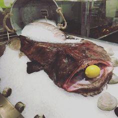 Monkfish on ice! #bostonpublicmarket #pescatarian #seafoodie #monkfish