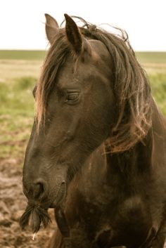 Létezik bajuszos ló? Elképesztő, ám ez a valóság. Az köztudomású lovasok (meg általában állatbarátok) körében,