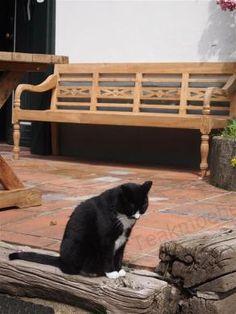 Teak Holz Bahnhofbank 4-Personen Teak Outdoor Furniture, Indoor Outdoor, Monkey, Cute, Animals, Top, Teak Garden Furniture, Cats, Jumpsuit