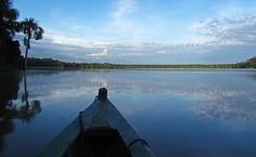 Descubre y cuida la magia de la Amazonía en nuestros tours RESPONSables! Visita www.responsibletravelperu.com  Discover and protect the magic of the Amazon in our RESPONSible tours! Visit www.responsibletravelperu.com  #Jungle #Peru #Amazonias #RESPONSible TravelPeru