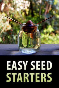Growing Avocado Plants from Seeds Avocado Dessert, Avocado Plant From Seed, Avocado Toast, Seed Tape, Growing An Avocado Tree, Veg Garden, Garden Plants, Indoor Garden, Seed Bombs
