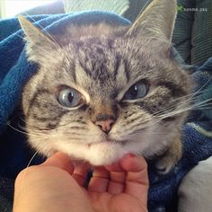 Кот графа Дракулы