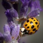 Camp Ladybug For Women  Liz's Garden Aromatherapy is going to camp...