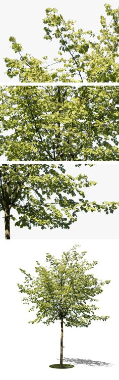 3835 x 4483 PNG, Tree image with transparent background, ready to download.