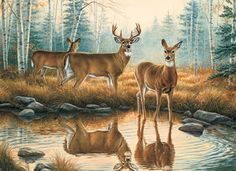 Deer Reflections Cross Stitch Pattern***L@@K***$4.95 CLICK VISIT TO SEE PATTERN FORSALE