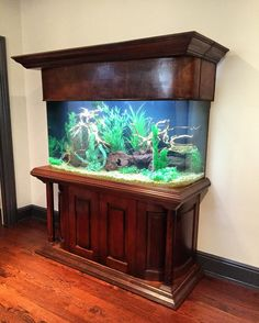 Custom 170 gallon freshwater aquarium.