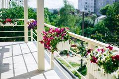 Intelligent Restaurant, летняя терасса, терасса, цветы, балкон, ресторан, васильков, возле киева