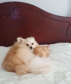Woman Adopts A Dog To Deal With Anxiety, And The Dog Adopts Her Kitten