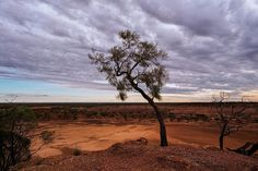 A tree clings to a hill before a stormy sky in outback Queensland. #australia #outback #tree #drought #wallart