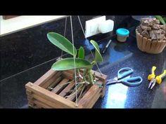 Como dividir e replantar sua orquídea epífita - YouTube
