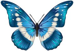 Butterfly Blue PNG Clip Art Image