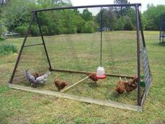 Moveable chicken cook with repurposed swing set. Terrific idea so it would take 2 people to move it.