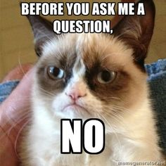 Grumpy Cat - Before you ask me a question