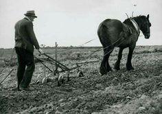 Travail de la terre à l'ancienne !!