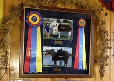 How do you memorialize your horse?   http://www.proequinegrooms.com/index.php/blog/my-blog/how-do-you-memorialize-your-horse/