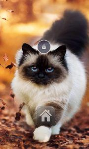 Exotic Cat Lock Screen is a cool, secure and customizable Lock Screen App for free with various Beautiful Live Wallpaper. Exotic Cat Lock Screen Apk Features: *Beautiful Wallpapers with Live effects. Get rid of your boring lock screen and download our new live locker. We provide various...