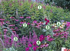 """Pink flower border with 1 Red Valerian, 2 Echinancea 'Pow Wow  Wild Berry', 3 Rosy-leaf Sage """"Bethellie' 4 Dahlia 'Bengale' 5 Alcea rosa """"Chater' violette, Echinacea 'Pow Wow White'."""