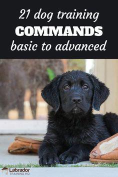 Dog Commands Training, Service Dog Training, Dog Training Treats, Basic Dog Training, Service Dogs, Dog Treats, Support Dog, Dog Potty, Dog Training Techniques