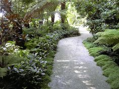 palms and boxwoods landscaping - Google Search
