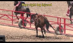 Don't Play at the Brutal Cheyenne Frontier Days Rodeo | SHARK has documented and exposed rodeos across the United States for more than two decades. In our considerable experience, the Cheyenne Frontier Days Rodeo is the most cruel and deadly rodeo in the world. Click for details and please SIGN and share petition asking band members of Aerosmith to withdraw from the Cheyenne entertainment lineup. Thanks.