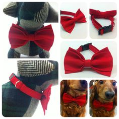 HUGE SALE Colorful Bright Red Plain Color Dog Cat Pet Collar with Special Bow Tie Free to Mix and Match on Etsy, $6.00