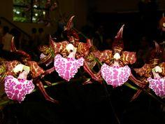 Rhynchostele uroskinneri; foto RJM - Flickr - Photo Sharing!