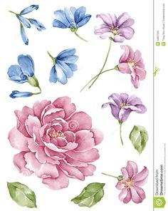 watercolor-illustration-flower-set-simple-white-background-50837565.jpg (1035×1300)