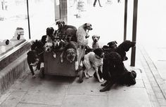 © Elliott Erwitt's Dogs - Small Edition, England, 1974, published by teNeues  Photo © 2012 Elliott Erwitt / Magnum Photos