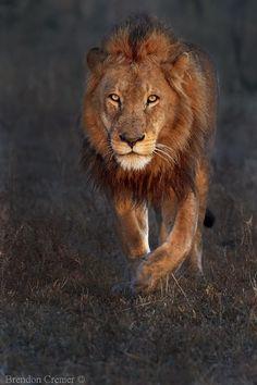 Morning Patrol, Kruger, S/Africa