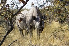 #Wild Watching in #Zimbabwe, #Africa Zimbabwe Africa, Tour Operator, Safari, Tours, Animals, Die Cutting, Animales, Animaux, Animais
