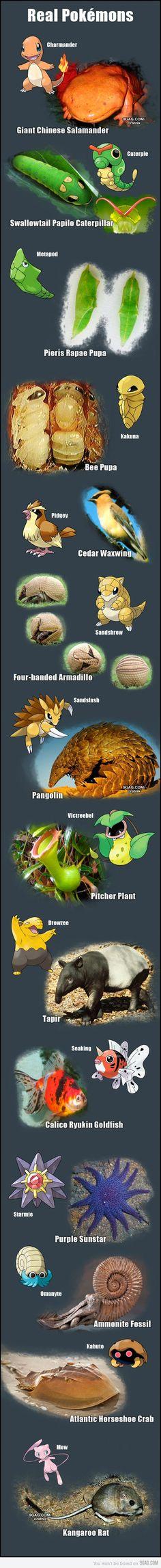 Real pokémons