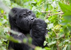 Photos from my trip to Uganda © Miikka Järvinen 2012 - My other posts from Uganda Uganda, Wildlife, Photos, Urban, Animals, Pictures, Animales, Animaux, Animal