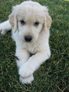 love the paw!  Just like Tedi!