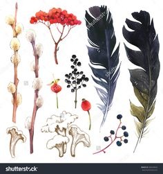 Watercolor Illustration With Branches, Leaves And Berries. Set Of Winter And Autumn Forest Plants And Feathers. Collection Of Herbarium Garden. Willow, Viburnum, Rosehips. - 500249632 : Shutterstock
