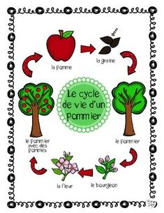 Apple Tree Life Cycle Posters and Science Pages ~ French ~ Le cycle de vie d'un pommier. Includes 6 Apple life cycle stages, Header (title page) and 6 arrows to create a bulletin board display. Tree Life Cycle, Apple Life Cycle, Life Cycle Stages, Montessori, Christmas Tree Art, Apple Unit, Guest Book Tree, Apple Theme, Kindergarten Activities