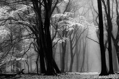BW #Landscape #photography in the #forest #Magical #light http://1x.com/photo/203386