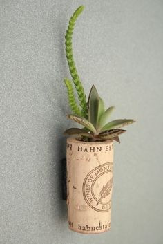 Plants-in-Corks.jpg (534×800)