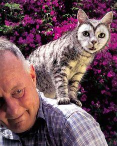 Unhypsignathe monstrueux African Bush Viper, Cute Cats, Funny Cats, Le Revenant, Pink Moth, Unusual Animals, Colorful Animals, Fantasy Movies, Funny Cat Videos