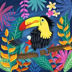 toucan illustration