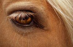 mustang ponies | AVISA | Peste equina africana