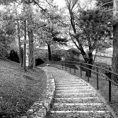 Oggi amici igers ci perdiamo tra i sentieri di un castello in bianco e nero (in attesa dei colori e delle luci di @festival_cidneon ✨)
