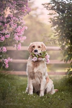 Some of the things we all respect about the Outgoing Golden Retriever Puppy Beautiful Dogs, Animals Beautiful, Cute Animals, Golden Retriever Mix, Retriever Puppy, Funny Golden Retrievers, Cute Dogs And Puppies, I Love Dogs, Doggies