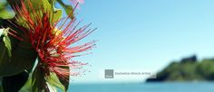 Showcasing New Zealand Stock Photography. From Iconic Kiwiana and Maoritanga to Aotearoa's Diverse Flora, Scenery and National Parks. The Essence of Aotearoa. Kiwiana, New Zealand, Flora, National Parks, Scenery, Herbs, Header, Photography, Wordpress