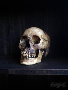 Female human skull replica The Empress. by NightshadeFX on Etsy, $120.00