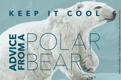 Advice from a Polar Bear Designer Sticker: $3.50 each