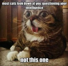 Attack of the funny cats---10 Pics