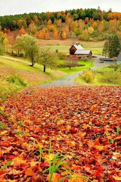 Great colors! #fall #autumn #leaves #landscape