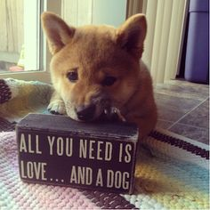 All You Need is Shiba Inu