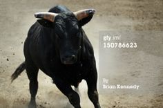 Black Bull Regime interfered with!  Morning wakeup for myself.  Bull charges into group in a cave.